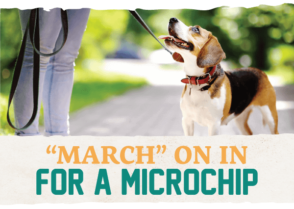 """March"" On in for a Microchip!"