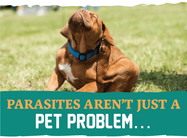 Parasites Aren't Just a Pet Problem…