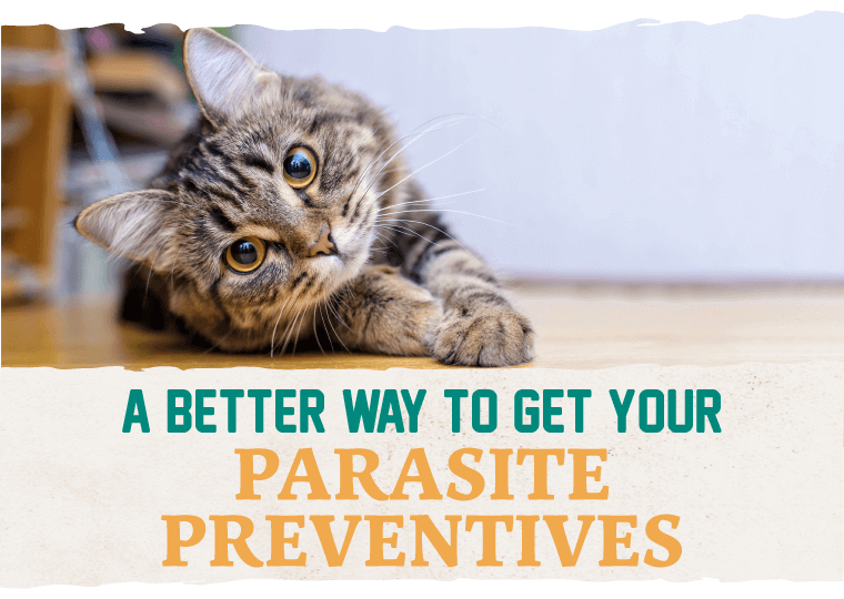 A Better Way To Get Your Parasite Preventatives
