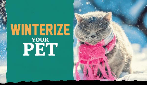 Winterize Your Pet