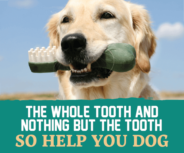 The Whole Tooth and Nothing But the Tooth, So Help You Dog