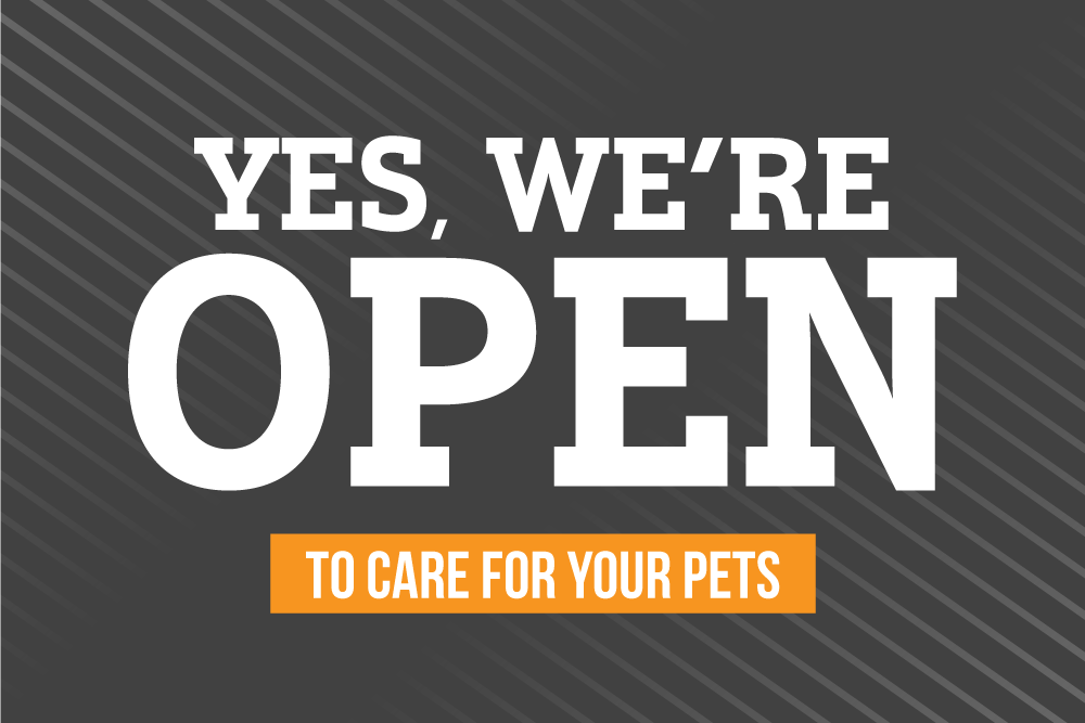 Yes, We Are Open - Sunriver Veterinary Clinic