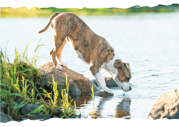 Parasite Protection & Core Vaccinations are Still Your Pet's Best Bet!