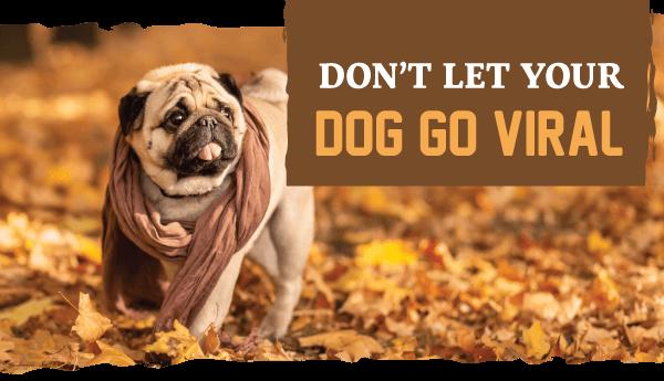 Don't Let Your Dog Go Viral!